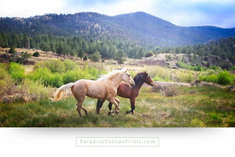 horse wall art canvas print two-running mustangs mountains