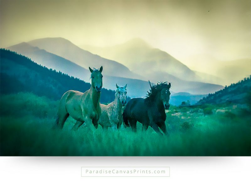 horse wall art on canvas prints - Showing three horses running in a mountain valley