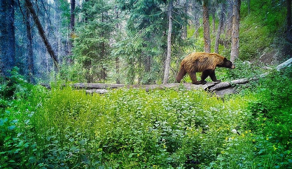 slider-bear