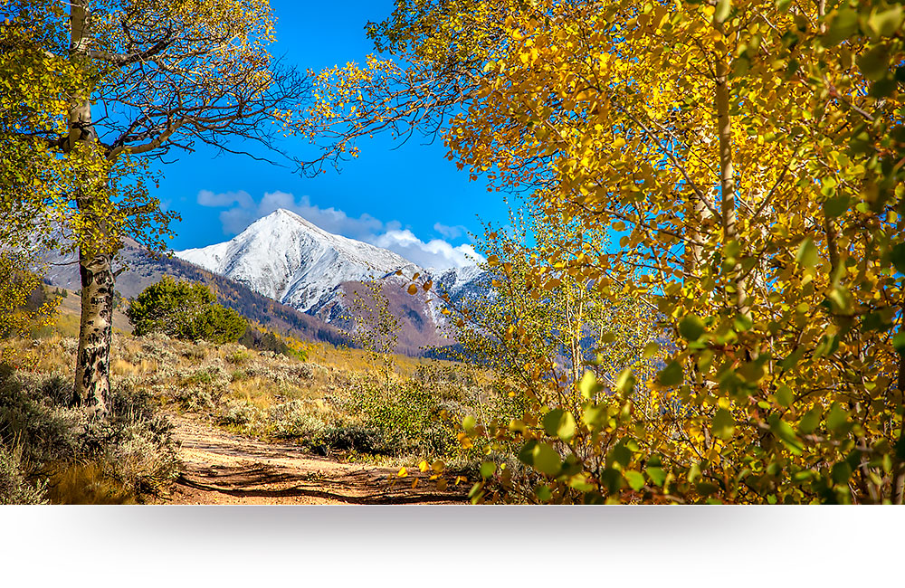 nature-canvas-prints-fall-aspen-colors