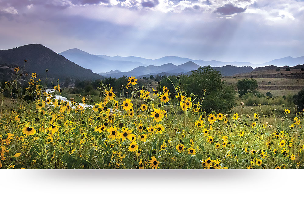 nature-canvas-prints-flowers-mountains
