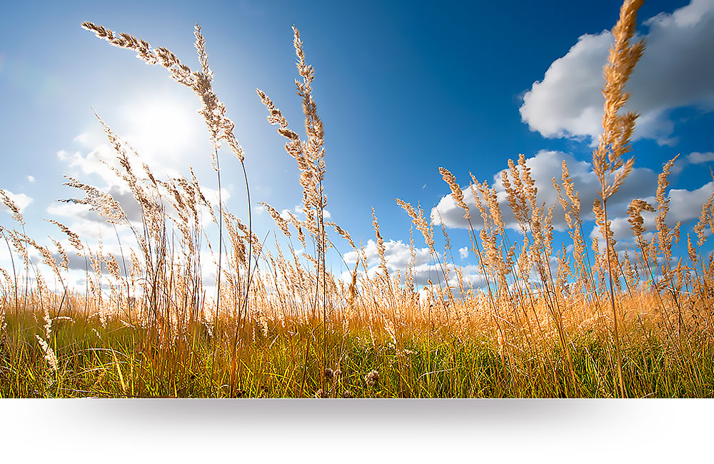 nature-canvas-prints-grass-blue-sky