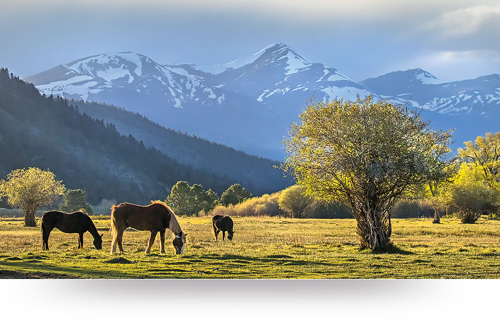 nature-canvas-prints-horses-valley