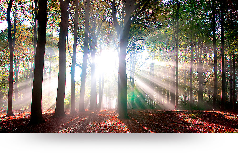 nature-canvas-prints-sunrays-trees