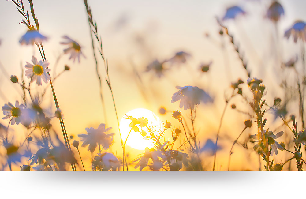 nature-canvas-prints-wildflowers-sunset