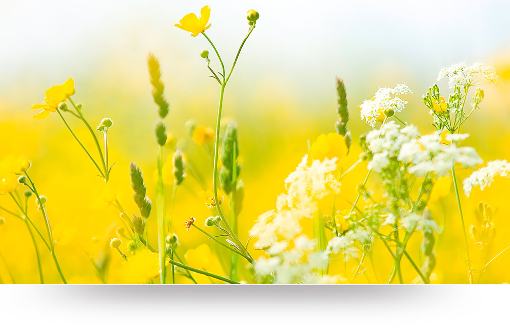 nature-canvas-prints-yellow-wildflowers