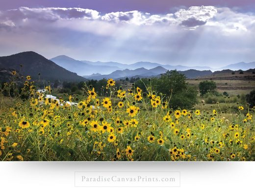 Landscape canvas print of wildflowers during the summer, in a mountain valley of Colorado.