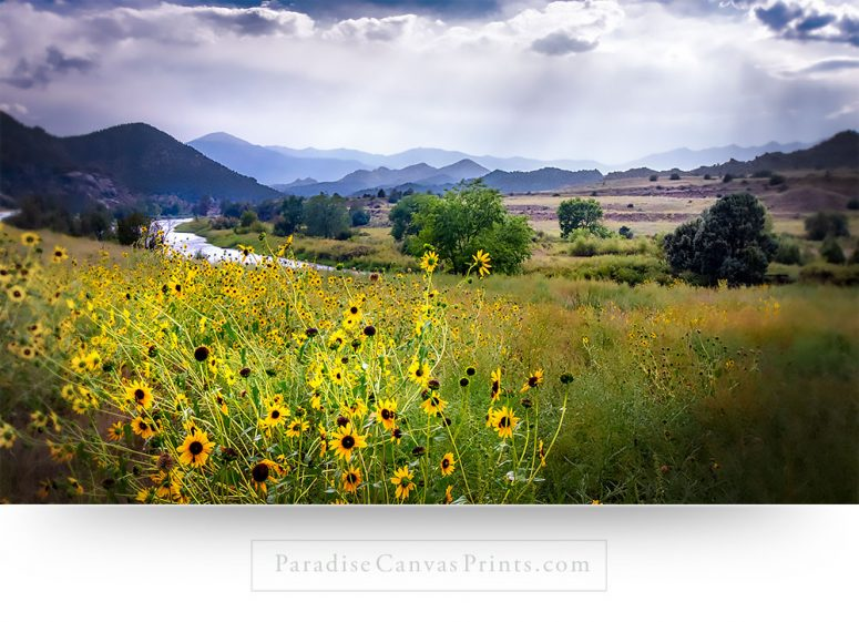 Beautiful mountain valley wildflowers. Wall art and canvas print