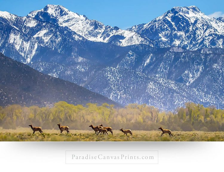 elk wall art mountains canvas prints