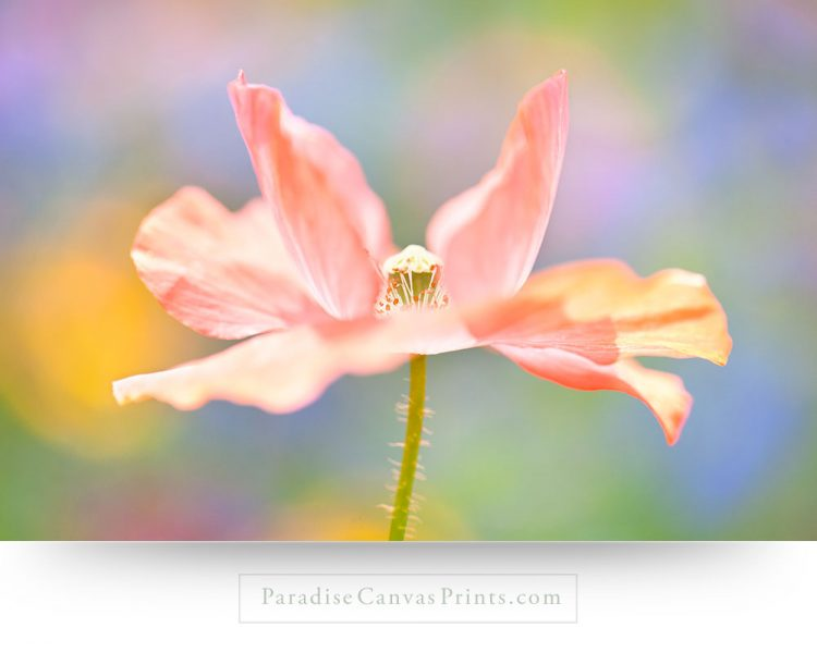 pink flower wall art decor canvas