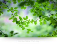 tree branch wall art canvas print