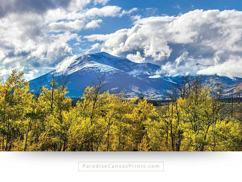 Snow Peaked Mountains With Aspen Trees In Fall Colors - Wall Art ...