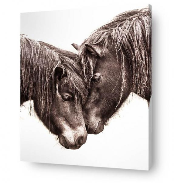 horse wall art canvas print - portrait two pony heads romance