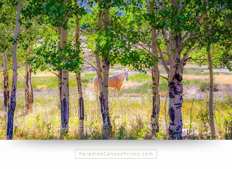 horse wall art canvas print white aspen trees