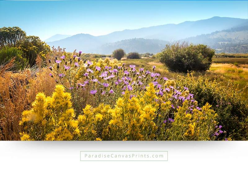 colorado wildflowers mountains summer wall art