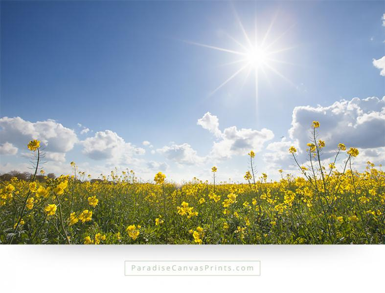 Living room wall art - Field of yellow flowers with sunshine and blue sky