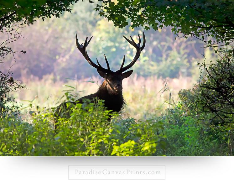 deer wall art canvas print