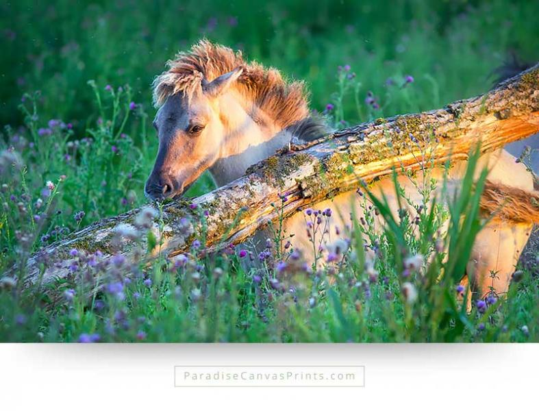 Wildlife canvas print with a photo of a horse at sunset among wildflowers