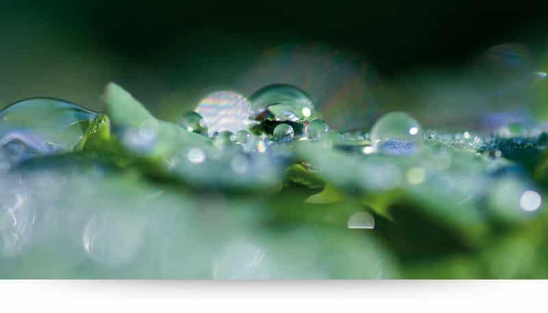 Dewdrops Like Diamonds