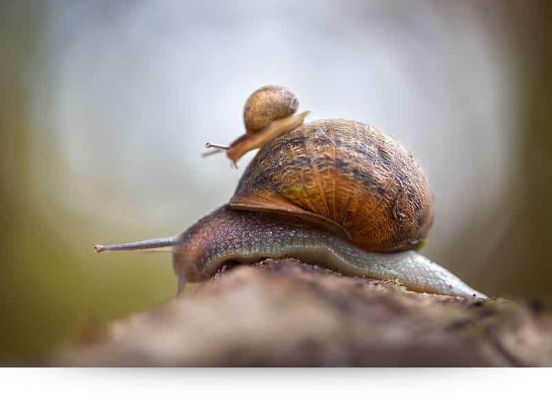 Sneeky Snails