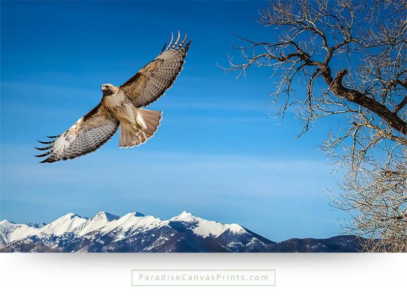 colorado wall art hawk branches mountains