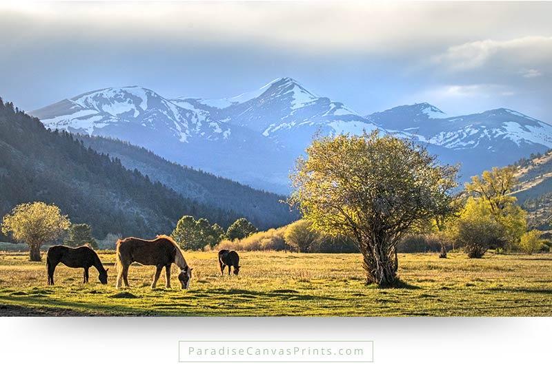 colorado wall art horses valley mountains